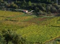 Odobreno 45.000 € za male poljoprivrednike!