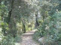 Zeleni pojas grada Korčule
