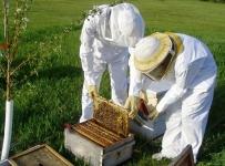 PODNOŠENJE ZAHTJEVA ZA POTPORE U PČELARSTVU