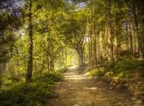 Podmjera 4.3. - Ulaganje u šumsku infrastrukturu